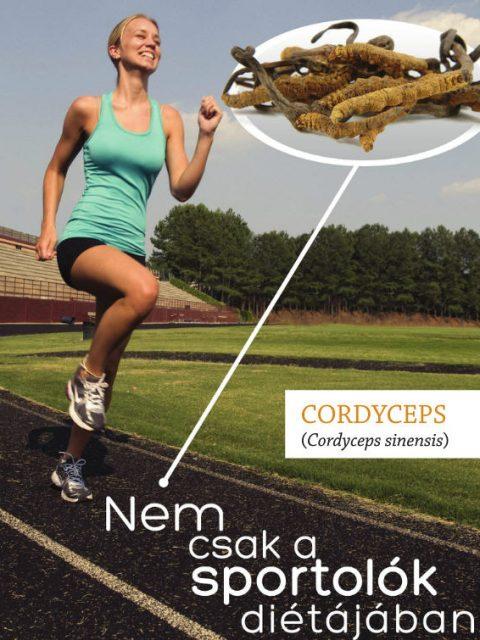 cordyceps és a sport