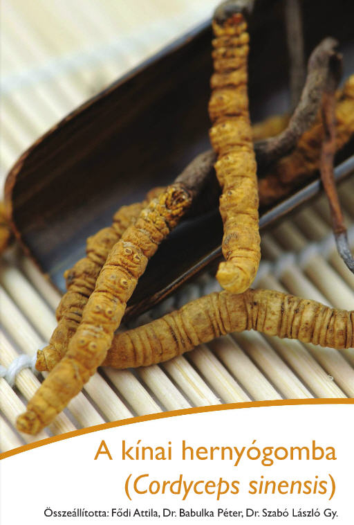 Cordyceps gyógyhatású gomba